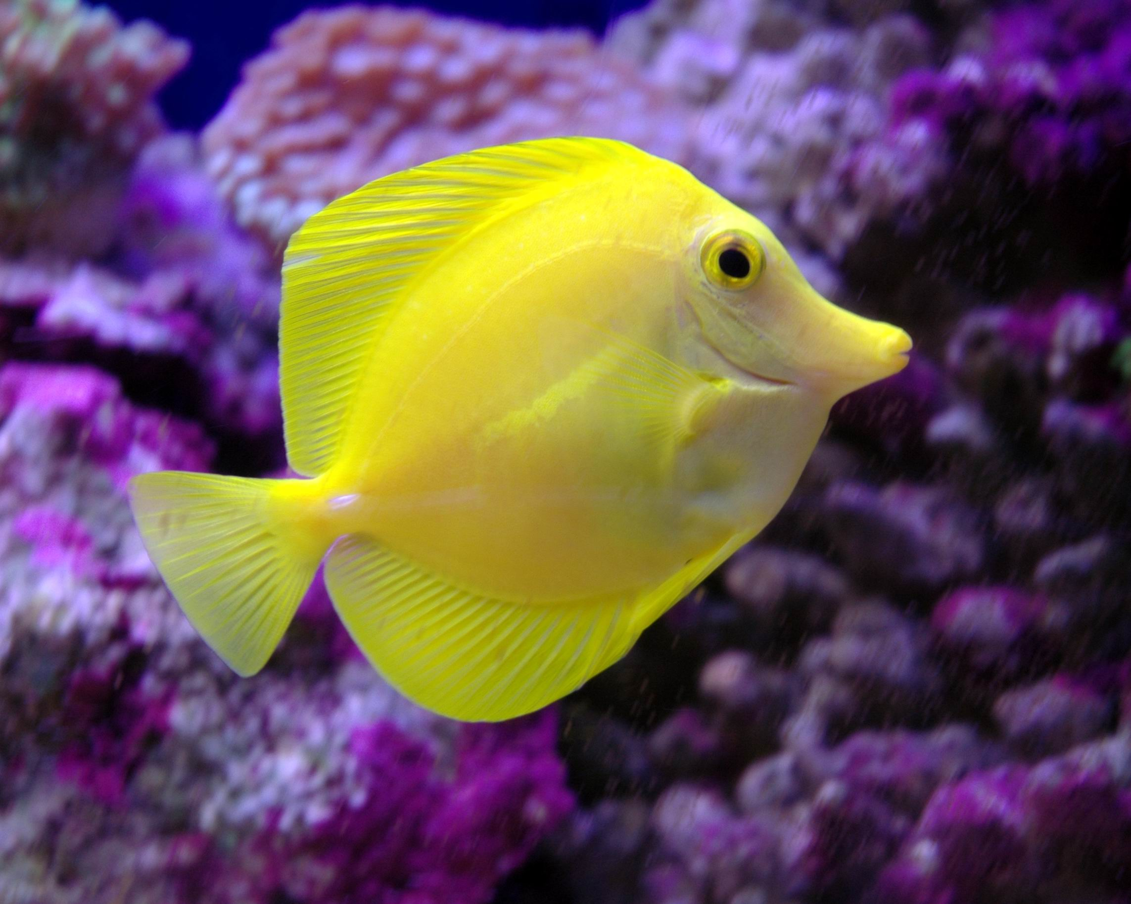 Rosie 39 s marine final for Yellow saltwater fish